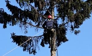 Обрезка  и удаление аварийных деревьев Днепропетровск